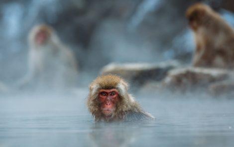 W gorącej wodzie kąpany…